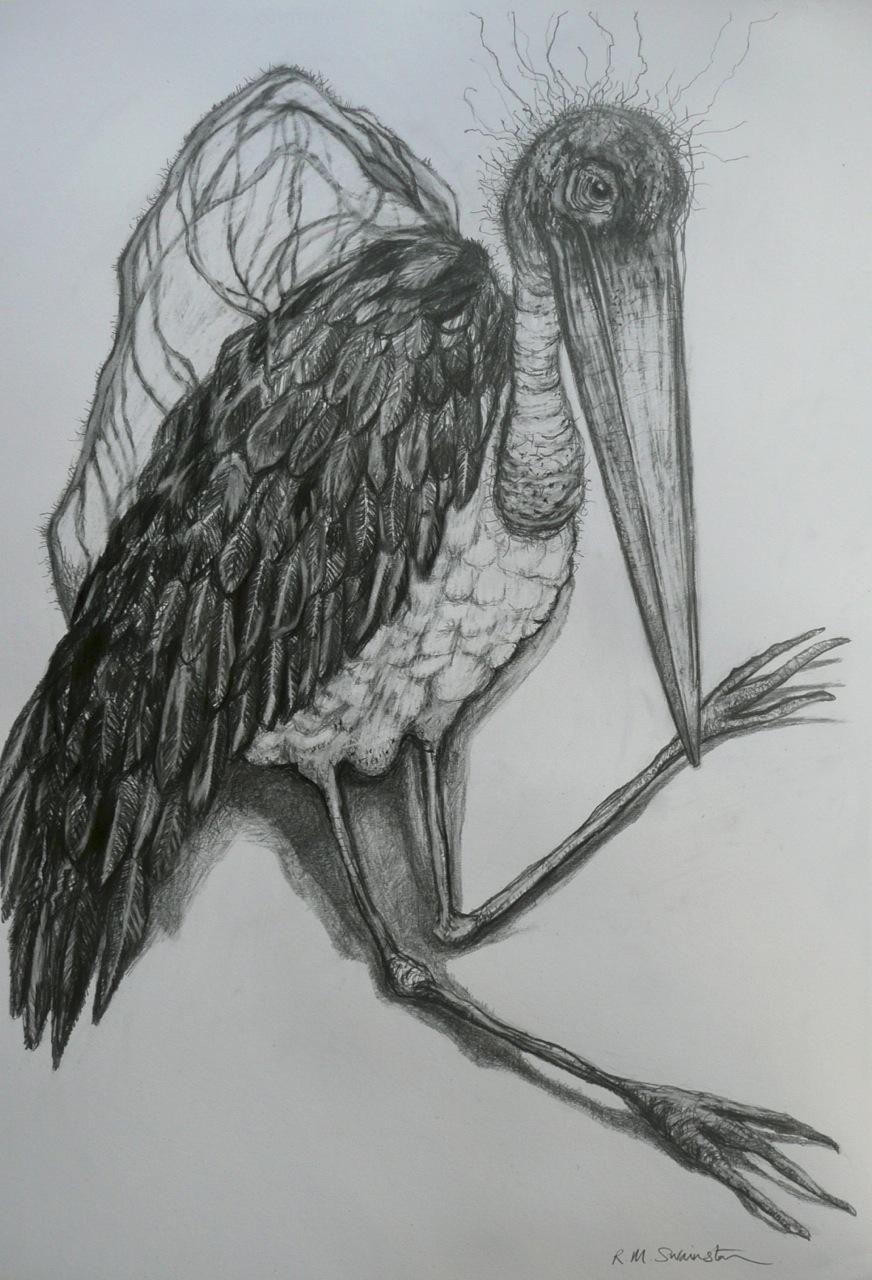 maribou-stork